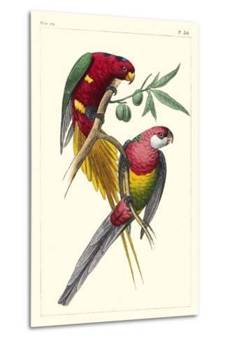 Lemaire Parrots III-C.L. Lemaire-Metal Print