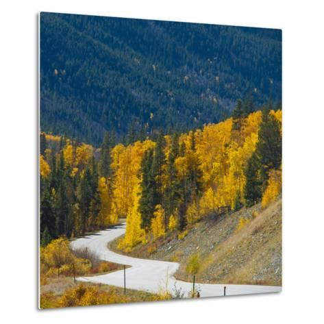 Fall Color of Aspen Trees and Evergreens Along Cottonwood Pass of Rocky Mountain National Park-Anna Miller-Metal Print