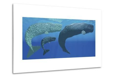 A Mother Sperm Whale with Calf Is Visited by an Interested Male--Metal Print