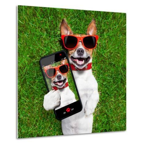 Funny Selfie Dog-Javier Brosch-Metal Print