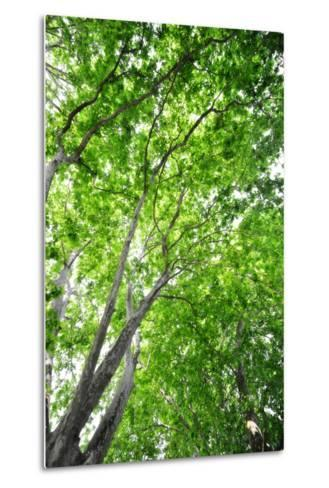 Green on Air-Philippe Sainte-Laudy-Metal Print