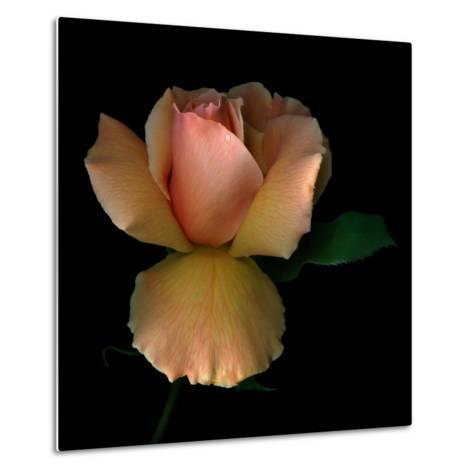 Rose 2-Magda Indigo-Metal Print