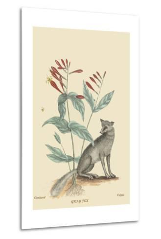 Gray Fox-Mark Catesby-Metal Print