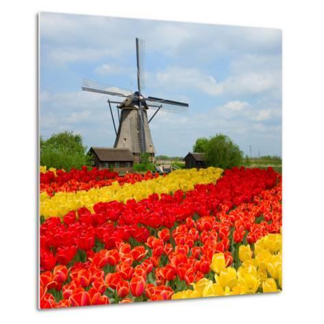 Dutch Windmill over Tulips Field-neirfy-Metal Print