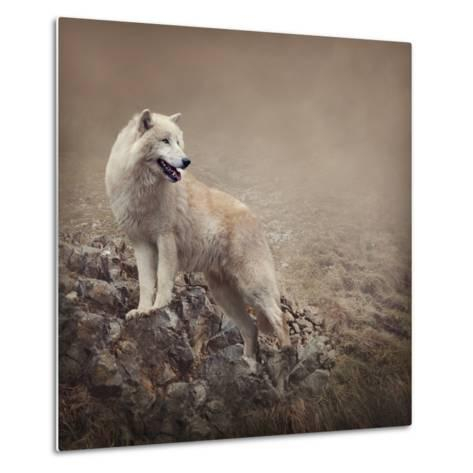 White Wolf at the Night-egal-Metal Print