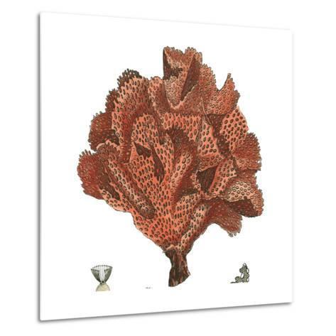 Red Coral IV-Vision Studio-Metal Print