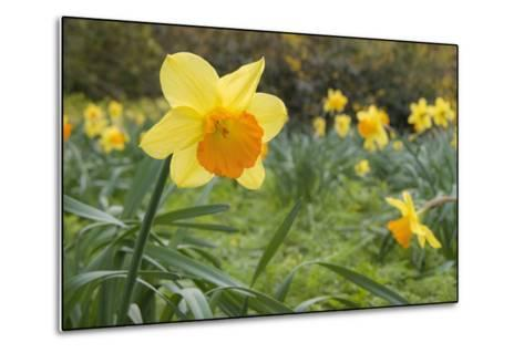 Focusing on Spring-Adrian Campfield-Metal Print