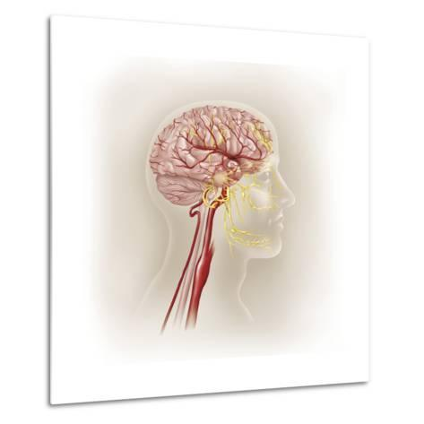 Detail of Ateries of the Human Head and the Trigeminal Nerve--Metal Print