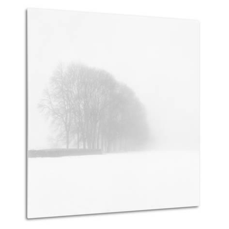 Snowy Trees-Doug Chinnery-Metal Print