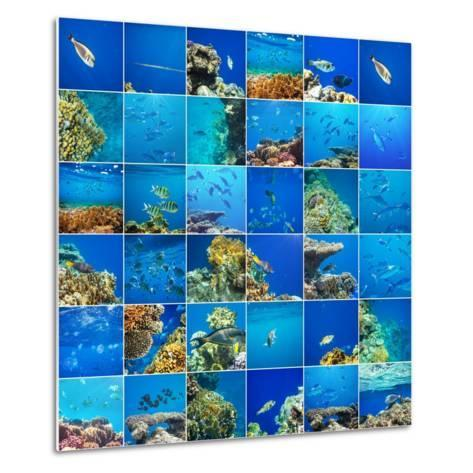 Coral Fish in  Red Sea,Egypt-Andrushko Galyna-Metal Print
