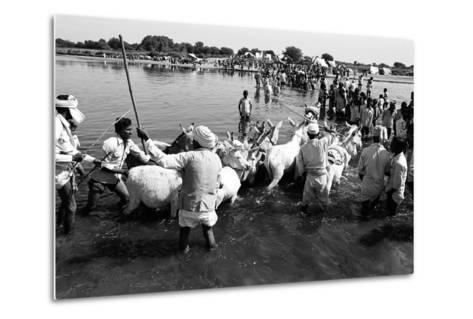 Donkeys and Men Crossing Sabarmati River, Vautha Fair, Gujarat, India, 1983--Metal Print