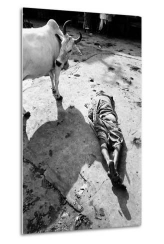 Prostrate Man Praying and Cow, Jagannath Temple, Puri, Orissa, India, 1977--Metal Print