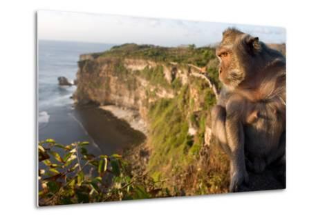 Monkeys Along the Cliffs Next to the Ulu Watu Temple Pura Luhur, Bali--Metal Print
