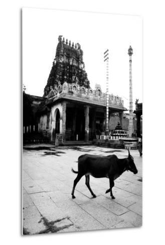 Cow and Poles in Kanchipuram Temple, Tamil Nadu, India, 1979--Metal Print