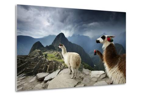Llamas Overlook the Pre-Columbian Inca Ruins of Machu Picchu-Jim Richardson-Metal Print
