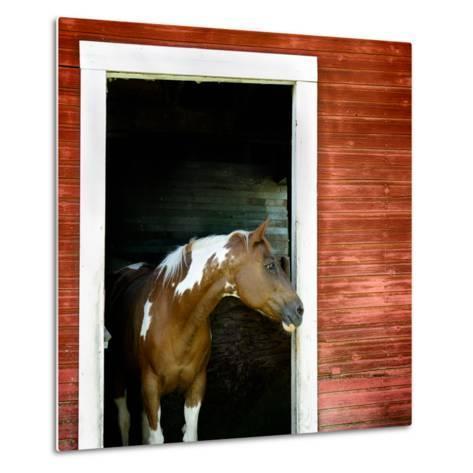 Palouse Horse-Ursula Abresch-Metal Print
