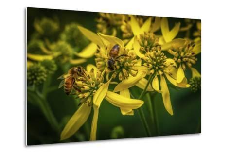Bees on Flowers-Stephen Arens-Metal Print