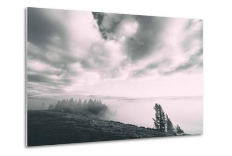 Dreamy Walk, Black and White, Hayden Valley, Yellowstone National Park-Vincent James-Metal Print