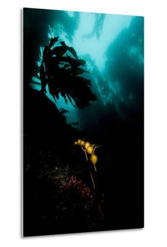 A Kelp Stem-Cesare Naldi-Metal Print