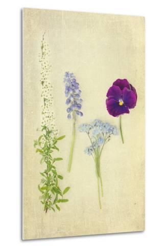 Blue and Purple Flowers-Elizabeth Urqhurt-Metal Print