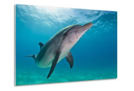 Portrait of an Atlantic Spotted Dolphin Swimming in Clear Water-Jim Abernethy-Metal Print
