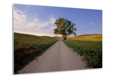 Landscape of a Country Road and Cottonwood Tree-Michael Forsberg-Metal Print