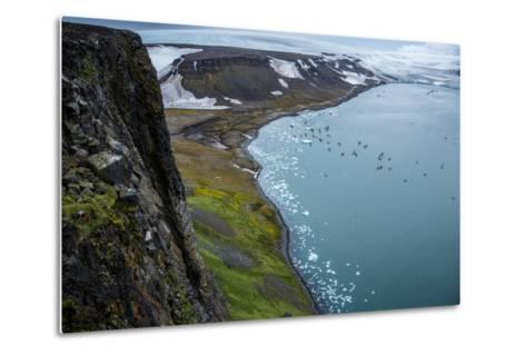 Little Auks and Glaucous Gulls from the Summit of Rubini Rock on Hooker Island-Andy Mann-Metal Print