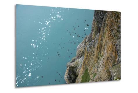Little Auks Fly by Basalt Columns on Rubini Rock, Hooker Island-Andy Mann-Metal Print