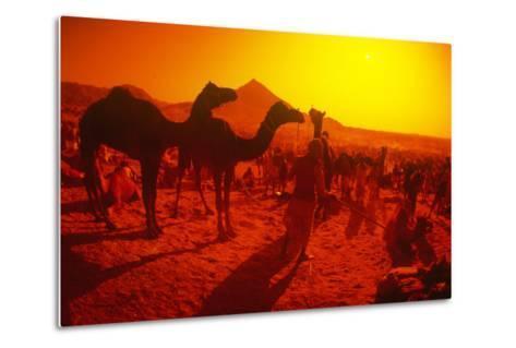 Pushkar Festival, Pushkar, Rajasthan, India--Metal Print