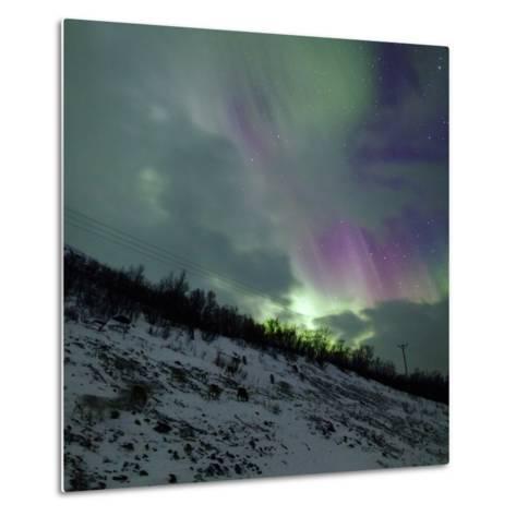 Aurora Borealis Above Reindeer in a Snow-Covered Winter Landscape-Babak Tafreshi-Metal Print