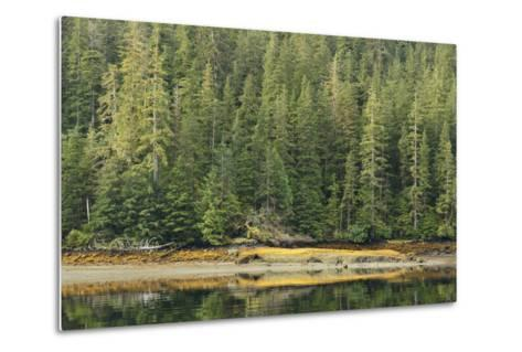 Conifer Trees Reflected in the Calm Waters of Rudyerd Bay-Jonathan Kingston-Metal Print