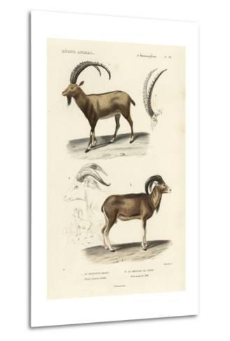 Antique Antelope and Ram Study-N^ Remond-Metal Print