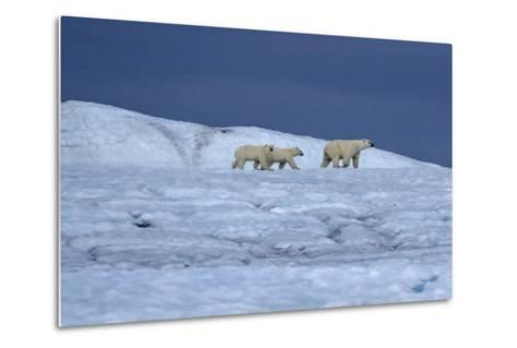 A Polar Bear, Ursus Maritimus, and Her Cubs Walk on the Top of an Ice Shelf-Jay Dickman-Metal Print