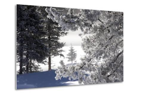 A Scenic Landscape of Snow-Covered Trees and Ground-Robbie George-Metal Print