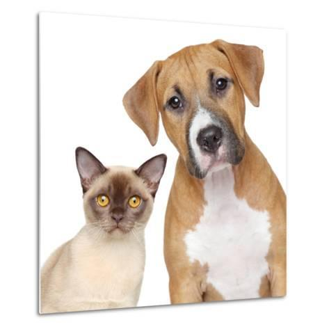 Cat and Dog Portrait on A White Background-Jagodka-Metal Print
