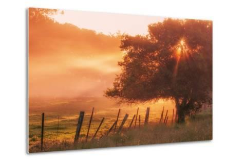 Sunburst Tree, Sunrise in Petaluma, Sonoma Valley, California-Vincent James-Metal Print