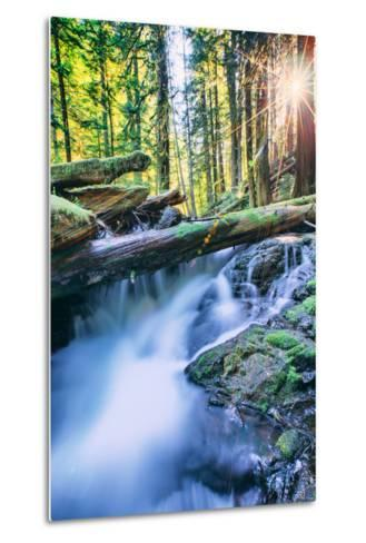Sun and Panther Creek Flowing Through Forest, Columbia River Gorge, Washington-Vincent James-Metal Print