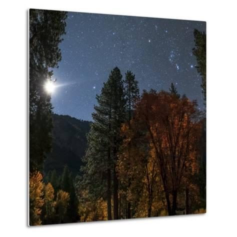A Moonlit Autumn Night with Constellation Orion Above Colorful Aspen Trees-Babak Tafreshi-Metal Print