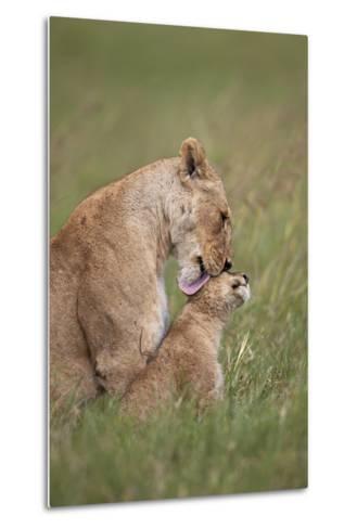 Lion (Panthera Leo) Female Grooming a Cub, Ngorongoro Crater, Tanzania, East Africa, Africa-James Hager-Metal Print