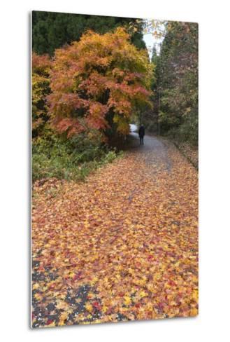 Autumn Leaves Along the Old Nakasendo Highway, Magome, Kiso Valley Nakasendo, Central Honshu, Japan-Stuart Black-Metal Print