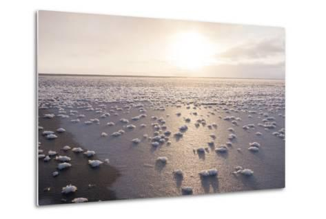 Frost Flowers Formed on Thin Sea Ice When the Atmosphere Is Much Colder Than the Underlying Ice-Louise Murray-Metal Print