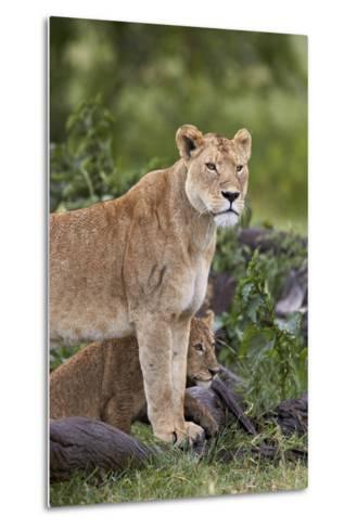 Lion (Panthera Leo) Female and Cub, Ngorongoro Crater, Tanzania, East Africa, Africa-James Hager-Metal Print