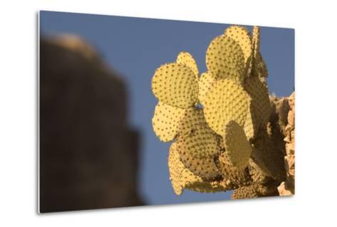 A Prickly Pear Cactus Grows in Santa Elena Canyon in Big Bend National Park, Texas-Phil Schermeister-Metal Print