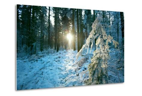 The Sun Finding a Small Opening in the Snowy Forest of Koenigstuhl-Andreas Brandl-Metal Print