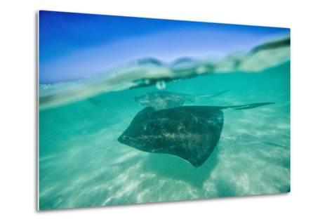 Snap on the Water at Stingray City-Roberto Moiola-Metal Print