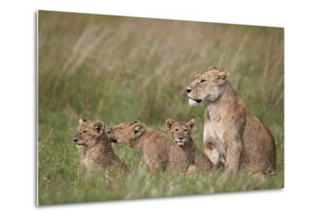 Lion (Panthera Leo) Female and Three Cubs, Ngorongoro Crater, Tanzania, East Africa, Africa-James Hager-Metal Print