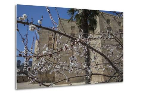 Almond Blossoms Bloom Outside of the Palace of the Shirvanshahs-Will Van Overbeek-Metal Print