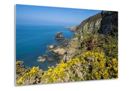 Blooming Gorse over the East Coast of Sark, Channel Islands, United Kingdom-Michael Runkel-Metal Print