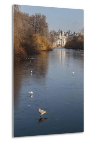 Sea Birds (Gulls) on Ice Covered Frozen Lake with Westminster Backdrop in Winter-Eleanor Scriven-Metal Print