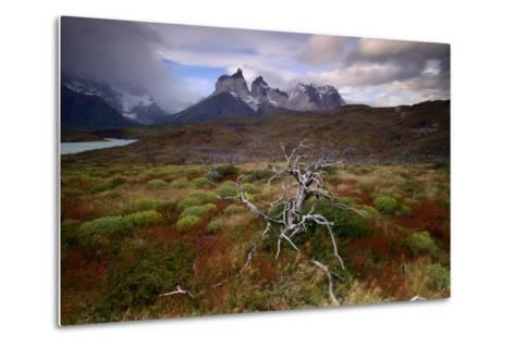 A Patagonia Scenic with the Andes Mountains, Scrub Vegetation, a Dead Tree, and Dramatic Clouds--Metal Print